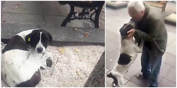 Cão Perdido Vivendo na rua Chora de Alegria Quando Finalmente Reencontra Seu Dono Depois de 3 anos ❤