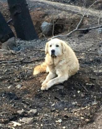 Esse Cachorro Esperou Por Semanas em sua Antiga Casa Queimada até que Sua Família Voltou Para Resgata-lo