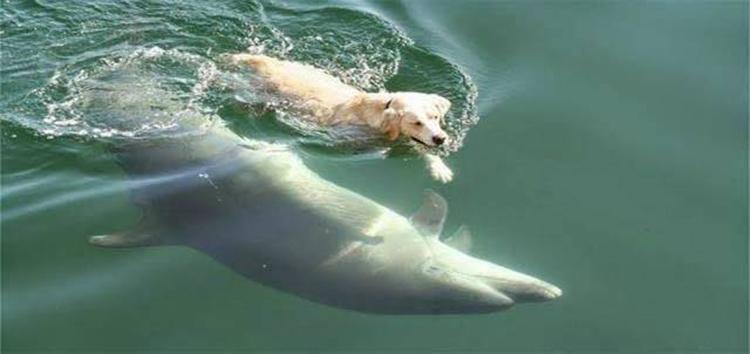 Ben, o cachorro que nada todos os dias para encontrar o grande amigo que fez no oceano.