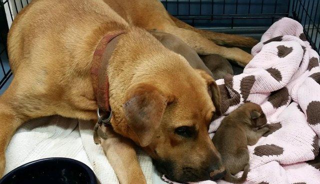 Ela escondeu seus 9 filhotes em uma vala para protegê-los de seu dono cruel