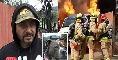 Ele Ignorou a Advertência dos Bombeiros e Entrou em sua Casa em Chamas para Salvar seu Cachorro.