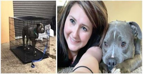 O único cão rejeitado em um evento de adoção, recebe um lar para sempre