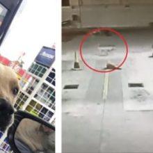 Adotou um cachorro de rua em seu posto de gasolina e ele arriscou sua vida para defendê-lo de um ladrão.