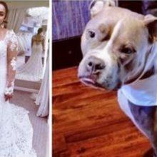 Comprou dois vestidos de casamento combinando para o seu cão acompanhá-la em seu caminho para o altar