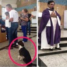 Esse cachorro assiste a missa todos os dias – No momento do sermão sua atitude chega a surpreender a todos.