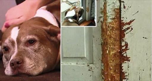 Mastigou a porta para sair e alertar a polícia sobre o perigo que ameaçou sua família.