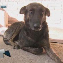 Um cachorrinho viaja mais de 160 km em busca das únicas pessoas que um dia mostraram seu amor