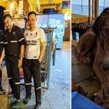 Um cão foi Milagrosamente Resgatado do mar a mais de 200 km da costa.