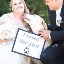 10 Razões Para se Apaixonar Por Alguém que Goste de Cachorros!