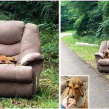 Deixaram um Cachorro Como se Fosse Lixo em uma Poltrona Descartada na Beira da Estrada!