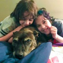 Algumas Crianças Adotam um Cão com Câncer Terminal para poder Realizar seus Últimos Sonhos!