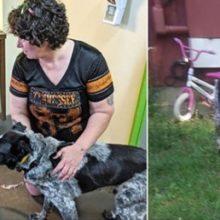 """""""Cão de Rua"""" Arrisca sua Vida para Proteger Menina de um Animal Selvagem e o que Acontece Depois Deixa Todos Encantados!"""