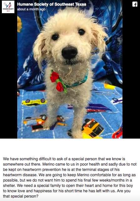Cãozinho de Rua em Fase Terminal Encontra Amor de um Lar nos Seus Últimos Dias