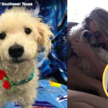 Cãozinho de Rua em Fase Terminal Encontra Amor de um Lar nos Seus Últimos Dias!