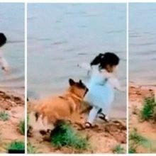 Uma Menina Estava Prestes a Cair em um Rio e seu Cachorro foi o Único que Percebeu o Perigo