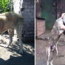 Filhote de Cachorro Retorna aos Braços de sua Mãe Depois de ter Vagado por Anos na Solidão da Rua.