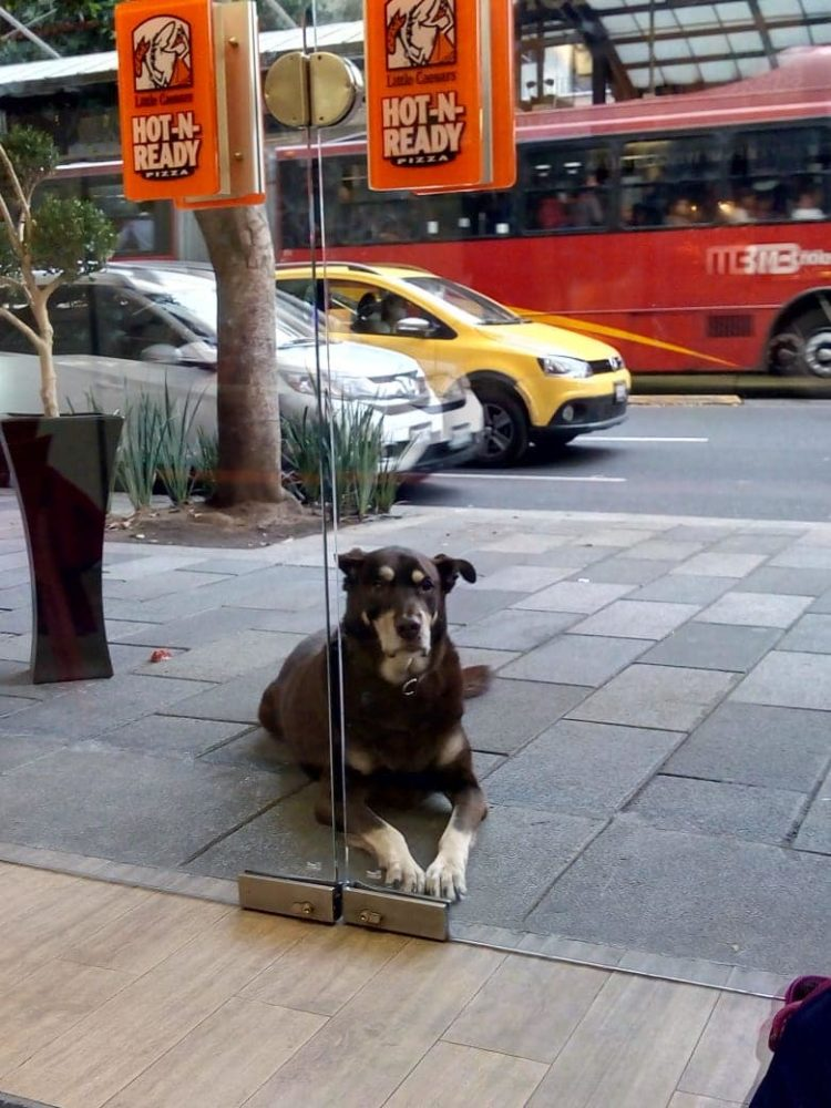 Mulher encontra cachorro fora da pizzaria e nao acredita no que ver em seu colar