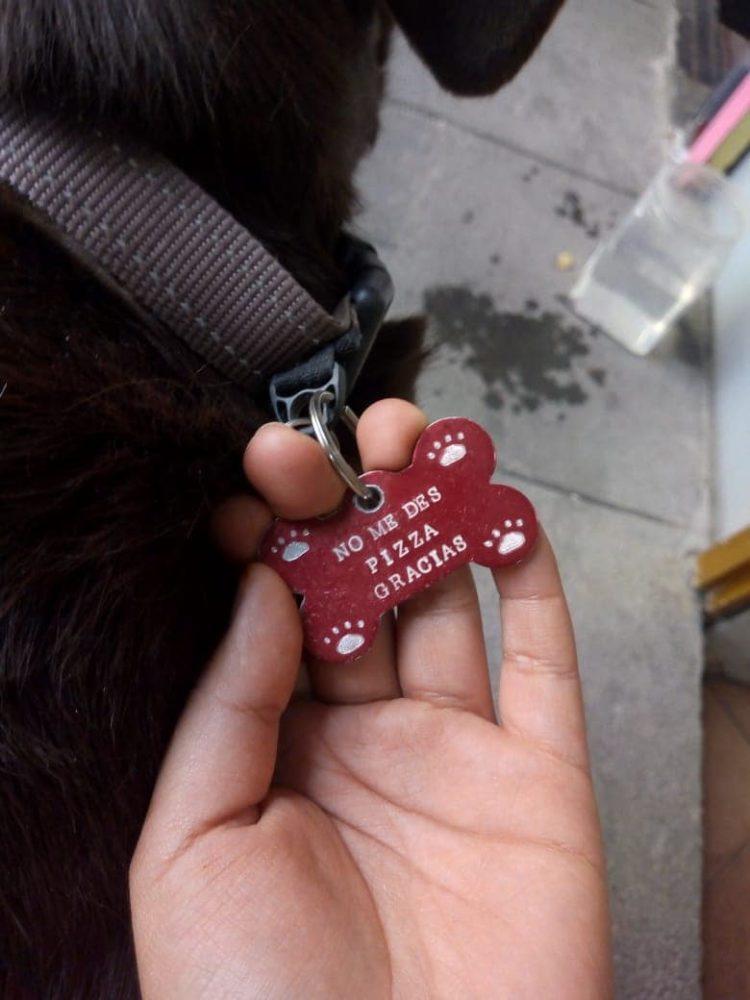 Mulher Encontra Cão Faminto do lado de fora de uma Pizzaria, e o que tinha em seu colar deixou todos Surpresos