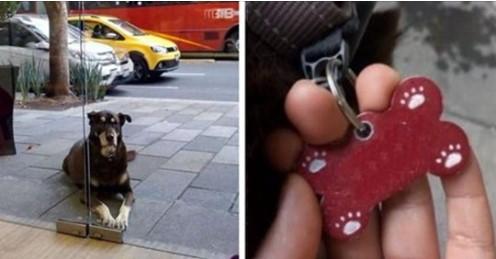 """Mulher Encontra Cão """"Faminto"""" do lado de fora de uma Pizzaria, e o que tinha em seu colar deixou todos """"Surpresos""""!"""
