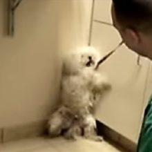 No Meio de um Colapso Nervoso, um Cachorrinho Percebe que eles a Salvaram de ser Sacrificada.