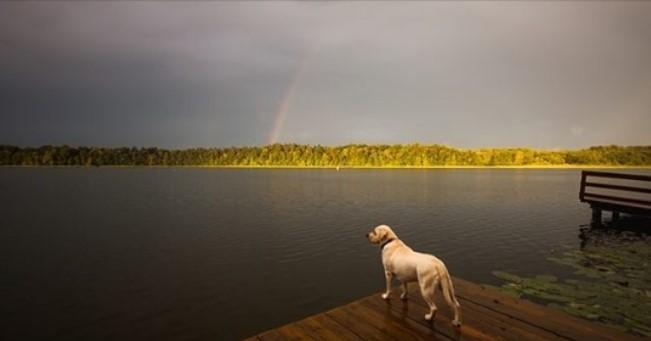 Por que Perder um Cão Pode ser Ainda Mais Doloroso do que a Morte de um Ente Querido.