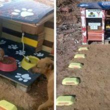Um Jovem Cria um Restaurante Para Cães de Rua Aberto 24 Horas Por Dia!