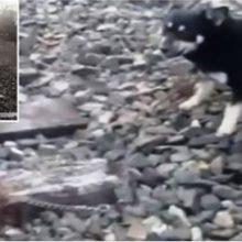 Um Maquinista Freia com Força para Salvar um cão Acorrentado aos Trilhos do Trem!
