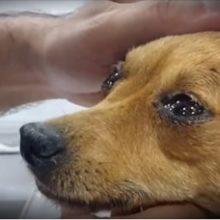 Um Veterinário Revela o que os Cães Sentem Antes de Morrer e Emociona Milhares de Pessoas!