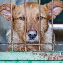 Uma Carta de um Cão Resgatado. Duvido Você Não se Emocionar!