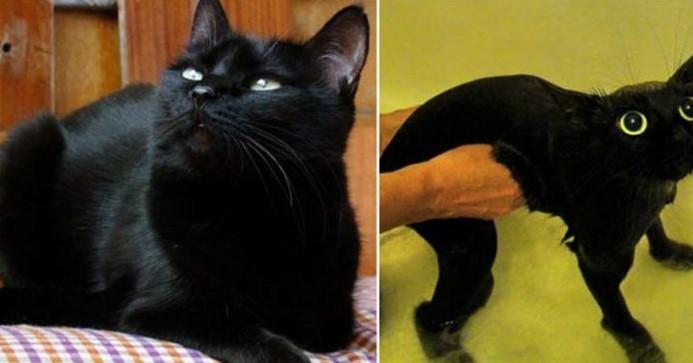 10 Fotos Hilárias de Animais de Estimação Antes e Depois da Hora do Banho, com Certeza vão Fazer Você Rir!