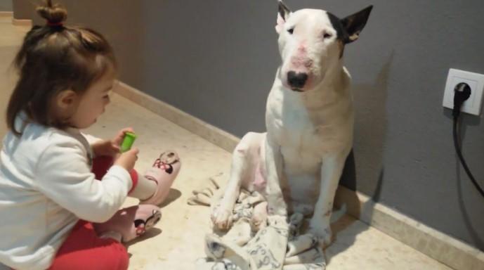 Adorável Criança de 2 anos Adora Brincar de Médico com seu Bull Terrier
