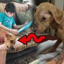 Após Anos de Terapia, a Única Coisa que Salvou esse Menino Autista foi um Filhote de Cachorro Quase Morto.