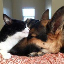 Barão, o pastor alemão, e Alvin, o gato, são os irmãos mais improváveis que têm a relação mais fofa de todos os tempos.