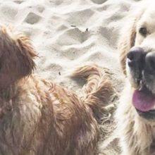 Cachorro Adorável com Senso Excepcional de Olfato e 'Dois Narizes' que o Tornam Duas Vezes mais Fofo!