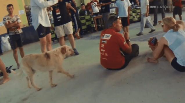 Cão de Rua Segue Atletas Extremos Por Quase 700 Quilômetros em Busca de Uma Vida Melhor