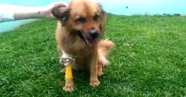 Cão Herói! Ele Reagiu a um Assalto e Salvou seus Donos em Curitiba!