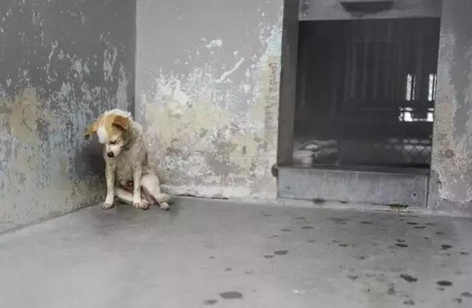 Cão que vivia triste em Abrigo, Encontra o Real Amor de uma Casa