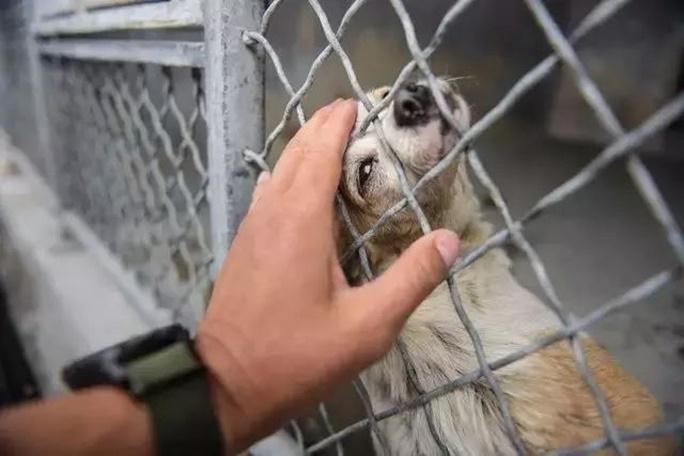 Os animais costumavam animar seus ouvidos e abanar o rabo enquanto passava por eles em seu abrigo, exceto aquele cão que parecia absolutamente desanimado.