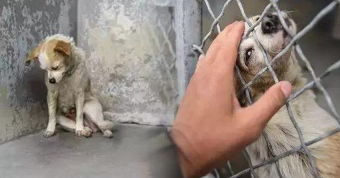 Cão que vivia triste em Abrigo, Encontra o Real Amor de uma Casa, Depois de Foto Tirada!