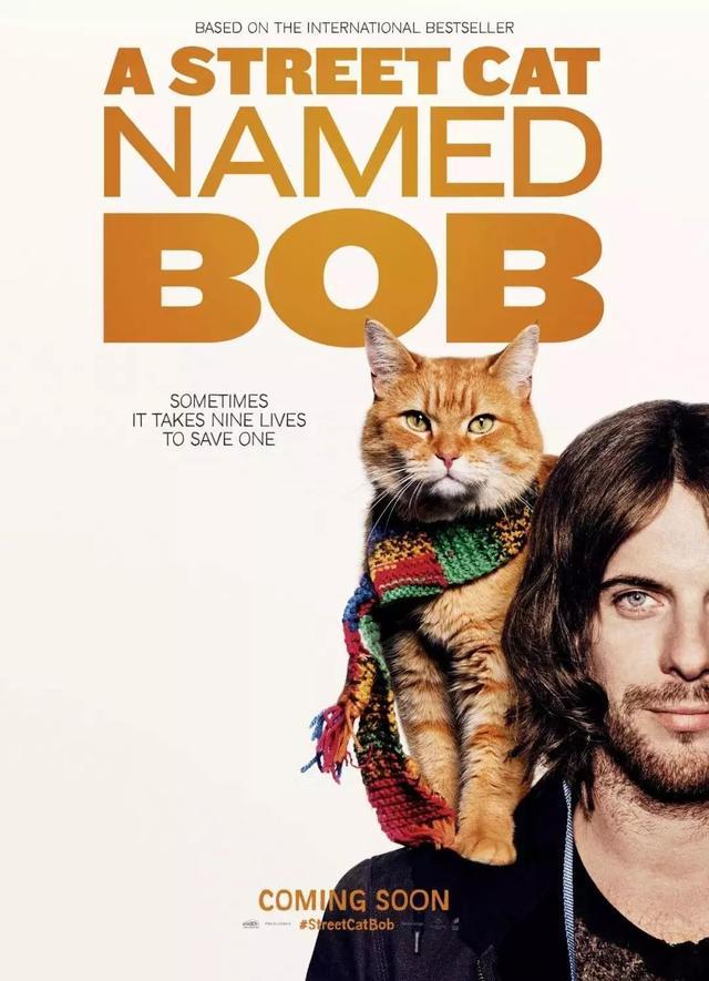 Conheça Bob, o Gato de Rua, que Salvou a Vida de um Músico de Rua