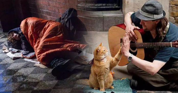 Conheça Bob, o Gato de Rua, que Salvou a Vida de um Músico de Rua!