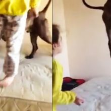 Duas Menininhas Ensinam o Cachorro a Pular na Cama e Sua Alegria Encanta o Mundo!