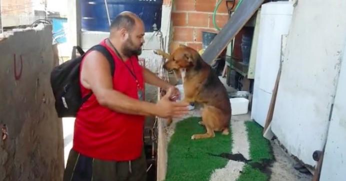 Este Cão Dedicado tem a Saudação Mais Doce Para seu Dono