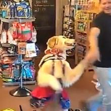Este Talentoso Cachorro e seu Dono Montaram Uma Impressionante Dança Merengue – é Adorável.