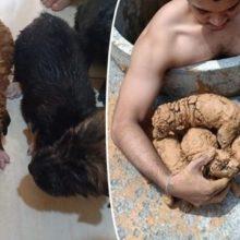 Homem Desce em um Poço e Resgata 5 Filhotes que Estavam Presos e Cobertos de Lama!
