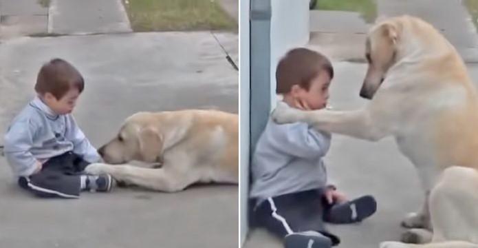 Um Vínculo Especial: O Vídeo Capta o Belo Momento de um Cachorro Fazendo Amizade com um Menino com Síndrome de Down!