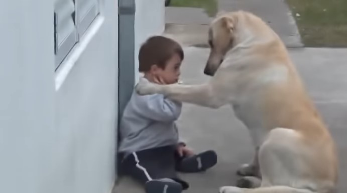 Um Vínculo Especial: O Vídeo Capta o Belo Momento de um Cachorro Fazendo Amizade com um Menino com Síndrome de Down