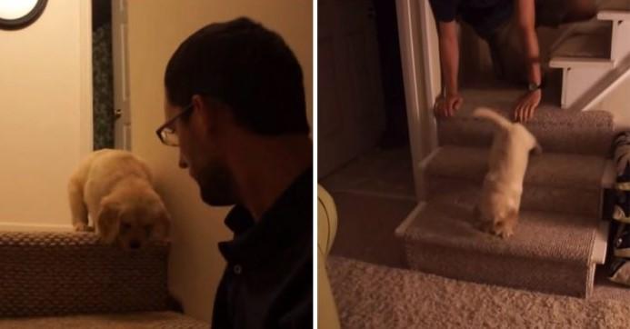 Papai Ensina Cachorrinho Nervoso a Descer as Escadas Mostrando Exatamente Como é Feito!