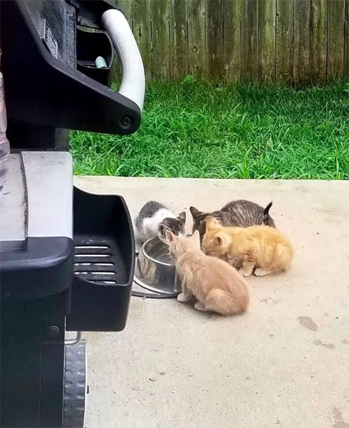 Um Gatinho Perdido Entra no Quintal de Uma Família Para Comer e Muda sua Vida Para Sempre