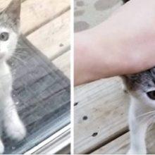 Um Gatinho Perdido Entra no Quintal de Uma Família Para Comer e Muda sua Vida Para Sempre!